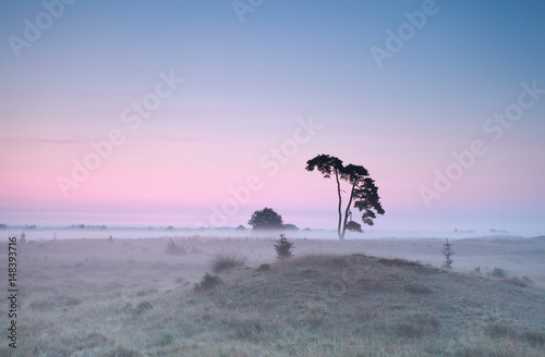 calm misty sunrise over meadow with pine - 148393716