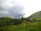 Tea Fields 10
