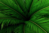 Palm leaves green pattern, abstract tropical background. - 148488140