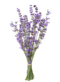Bundle of lavender isolated on white background. - 148714583