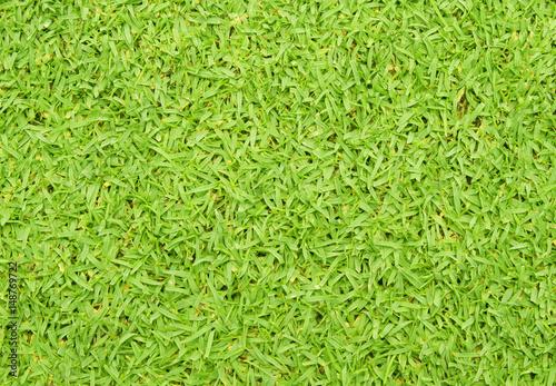 Fotobehang Planten grass