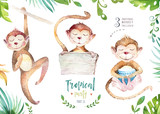 Fototapety Hand drawn watercolor tropical plants set and monkey. Exotic palm leaves, jungle tree, brazil tropic botany elements and monkeys. Perfect for fabric design. Aloha set,