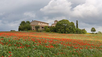 Poppies field around a rural country house in Catalonia