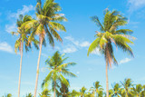 Optimistic palm tree on tropical island. Blue sky background.