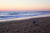 Sunset on the beach with senior happy dog playing in the sand. Cadiz - Spain