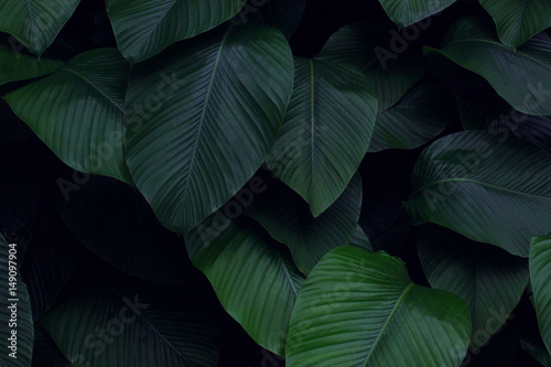 Real tropical leaves background, jungle foliage - 149097904