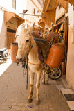 Donkey in Fes, Morocco