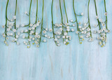 Background blades of lily of the valley on a blue wooden top.Convallaria majalis
