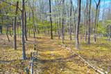 里山の雑木林