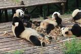 Pandas family lunch