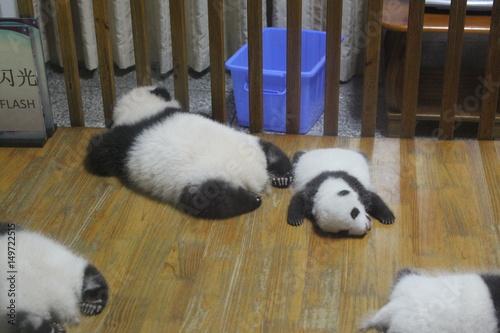 Fotobehang Panda Baby pandas