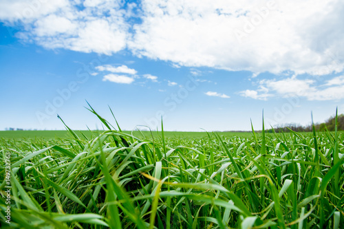 Green grass, a distant prospect, clean air and a beautiful blue sky
