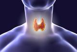 Thyroid gland inside human body. 3D illustration - 149742191