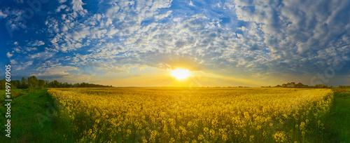 Field of rape at sunrise