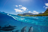 Pod of dolphins traveling along shoreline in blue ocean water. Split half-water seascape with green mountains on background