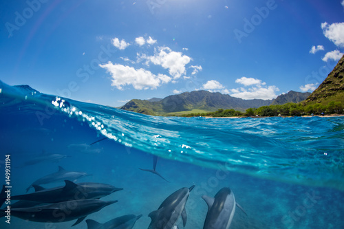 Plexiglas Dolfijn Pod of dolphins traveling along shoreline in blue ocean water. Split half-water seascape with green mountains on background