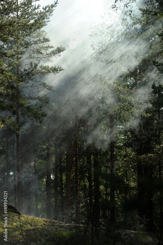 forest in fog - 149934321