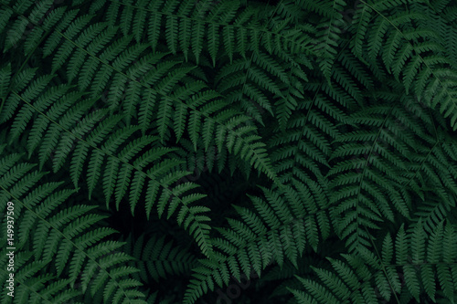 Real tropical leaves background, jungle foliage - 149937509