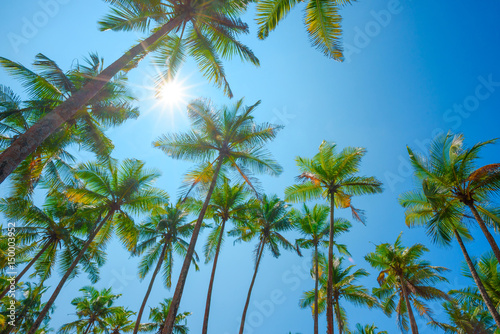 Tropical palm trees over clear blue summer sky with shining sun