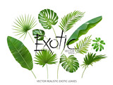 Vector tropical exotic leaves, realistic jungle leaves set isolated on white background. Palm leaf collection. Quality watercolor imitation. Not trace. - 150017130