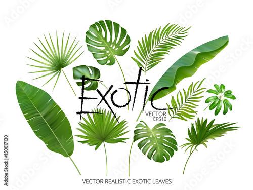 Wektor tropikalny egzotyczne liście, realistyczne liście dżungli zestaw na białym tle. Kolekcja liści palmowych. Jakościowa imitacja akwareli. Bez śladu.