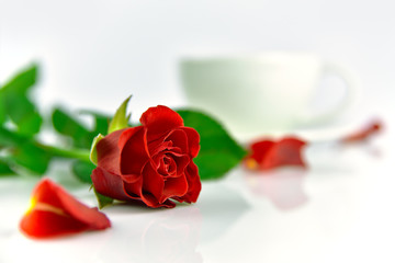 Red rose with cup of coffee in the morning