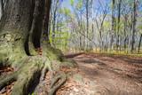 Landscape of spring forest or park sunny day
