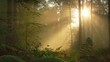 Time lapse footage of warm rays of sunlight shining through the trees in a foggy forest
