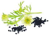 Nigella flower with seeds - 150151911