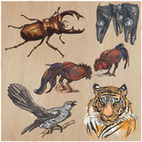 An hand drawn vector collection, pack of animals. Colored line art. - 150203192