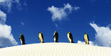 penguins coming out of a desert