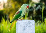 Parrot, lovely bird, animal and pet at natural park