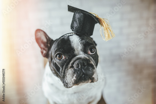 Portrait of dog with student cap Poster