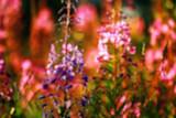 Blurred background defocus