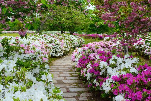 Canvas Azalea Peaceful stone walking path in a garden of spring azalea flowers and plum blossoms