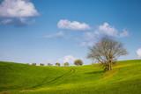 Hügel Jägersitz Baum Blauer Himmel Sommer