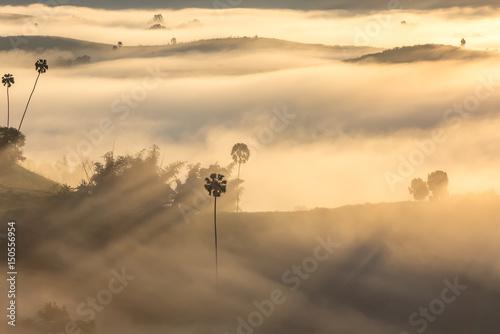 Deurstickers Toscane Morning Mist and Sunrise in Phetchabun Thailand