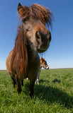 close up of pony on meadow - 150604963