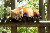 Panda roux Firefox