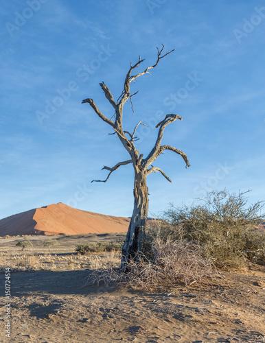 Dunes and dead tree on the Sossusvlei desert plato of the Namib Naukluft Nationa Poster