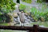 Malaysian Bird Park 43