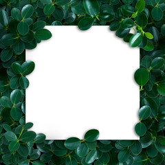 Nature layout made of tropical leaves with paper card note