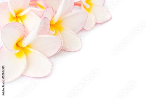 Fotobehang Plumeria Closeup sweet pink plumeria on white blackground