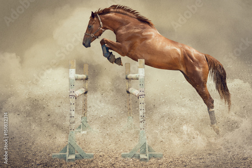 Loose jumping  of horse. © irinamaksimova