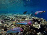 Wonderful and beautiful underwater world with corals and tropical fish - 150870175