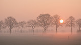 Landscape with a row of trees and a rising sun and a grass field with fence on a misty morning