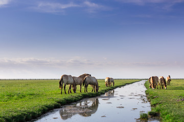 Beautiful horses in green field with small river
