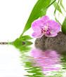 reflets d'orchidée