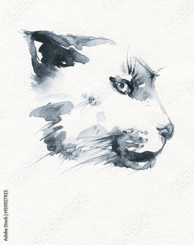 Puma. illustration. watercolor painting