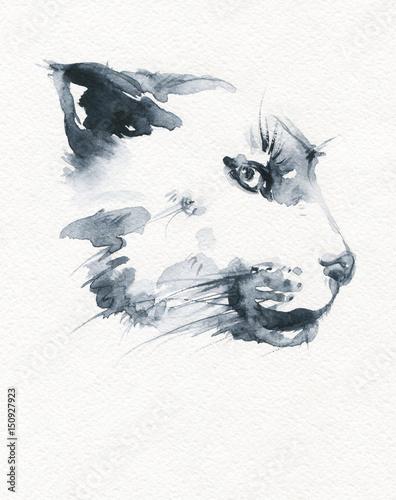 Puma. illustration. watercolor painting © Anna Ismagilova